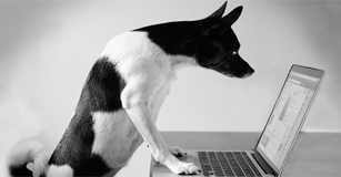 image of dog working on a laptop