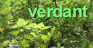 image of front of vocubulary trading card for the word verdant