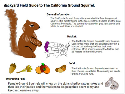sample student field guide page for a squirrel